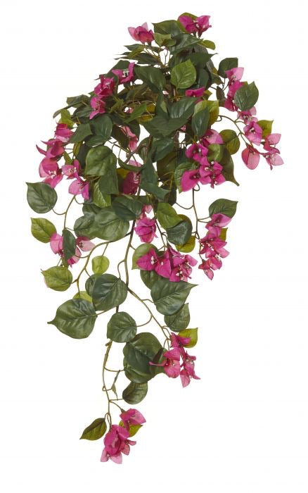 Bougainvillea Hanging Bush