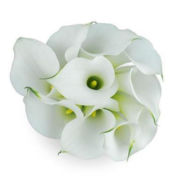 Aspen-White Mini Callas - Ambience Flowers