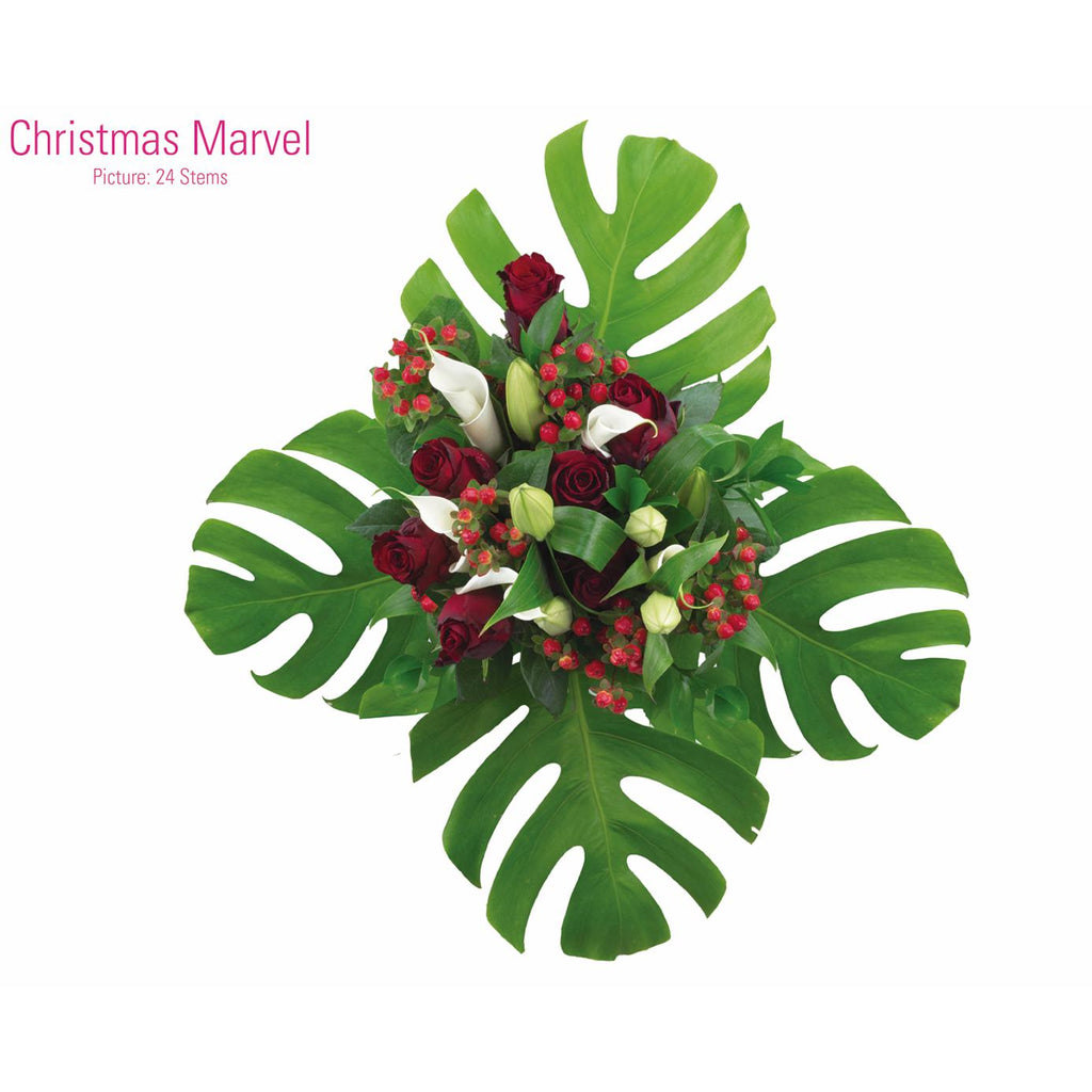 CHRISTMAS MARVEL - Ambience Flowers