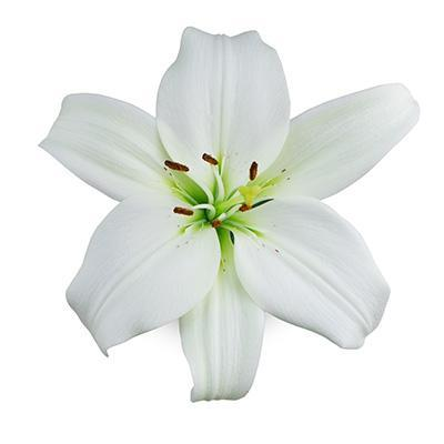 White Asiatic Arcachon Lilies - Ambience Flowers
