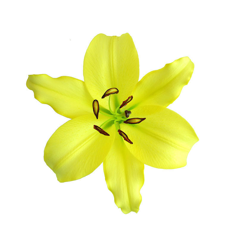 Yellow Oriental Leshotho Lilies - Ambience Flowers