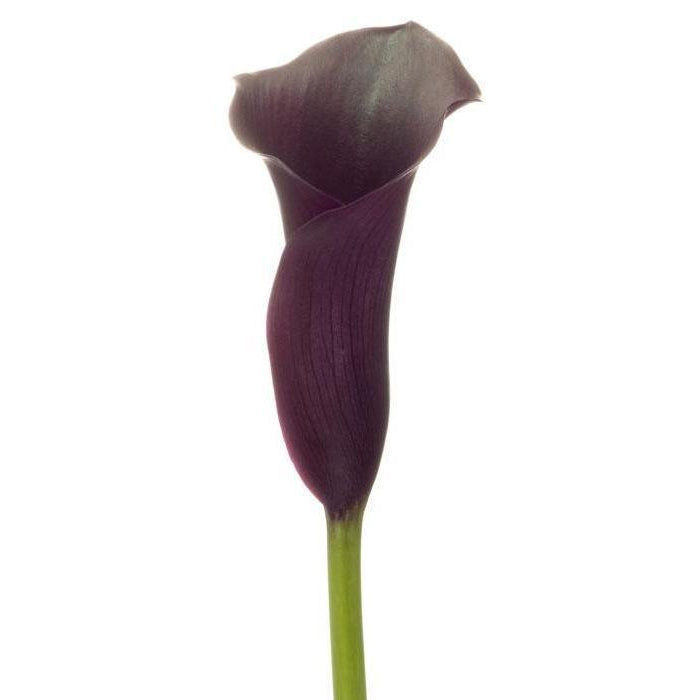Naomi-Sensual Purple Mini Callas - Ambience Flowers