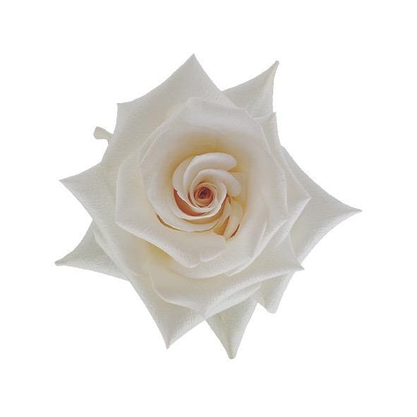 Roses Queen of Pearl - Cream White - Ambience Flowers
