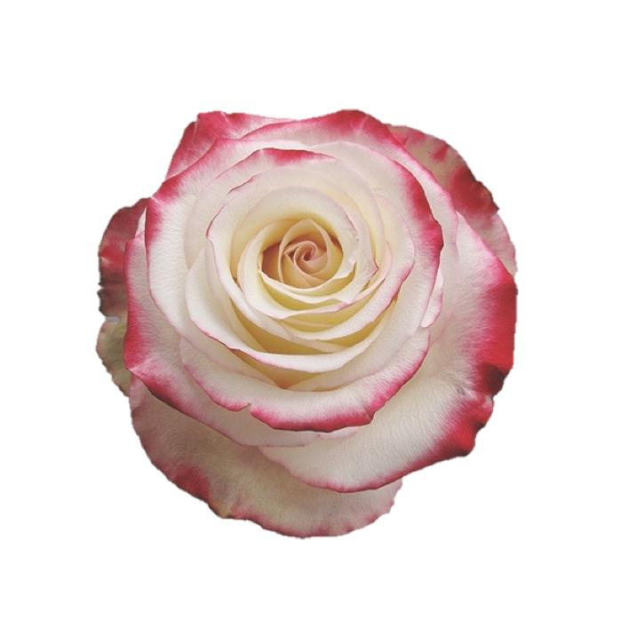 RED SWEETNESS 100 Roses Variety Box - Ambience Flowers
