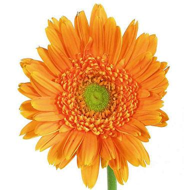 Gerberas Orange - Ambience Flowers