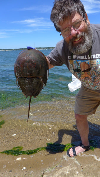Mark Rea's horseshoe crabs
