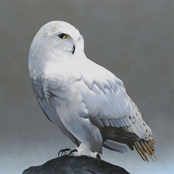 Snowy Owl on Rock 10x10 Panel