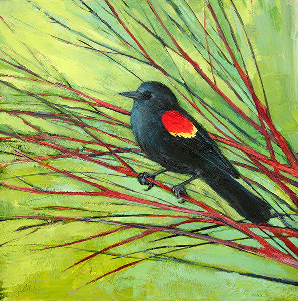 painting of red winged blackbird in branches