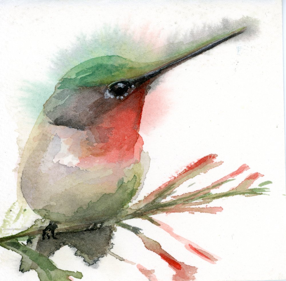 Ruby Throated Hummingbird #2