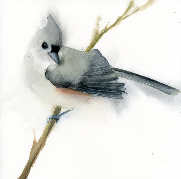 Tufted Titmouse Green Branch
