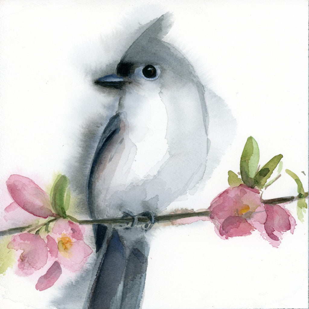 Tufted Titmouse on Cherry Blossom Branch (looking left)