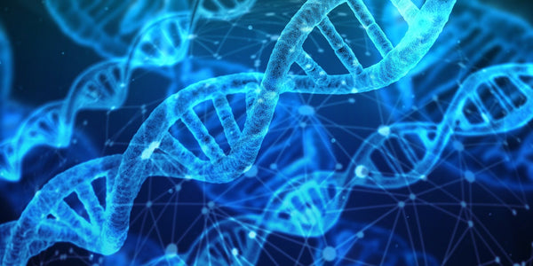 What role does functional genetics play in fertility? What can you do about it?