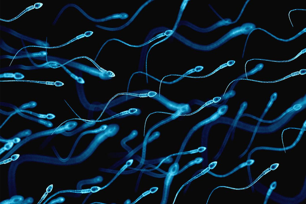The science behind sperm - How to naturally improve the health of your swimmers!