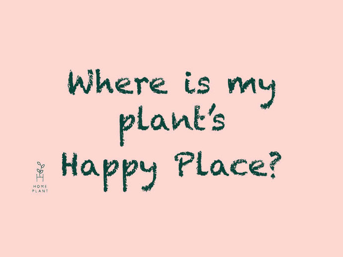 VIDEO GUIDE: Where is your plant's happy place?