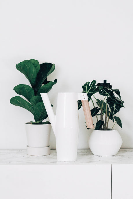 Five things you need to know when picking a houseplant