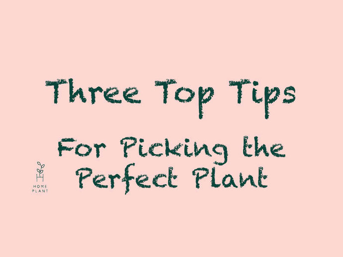 VIDEO GUIDE: Three Top Tips for picking the perfect plant