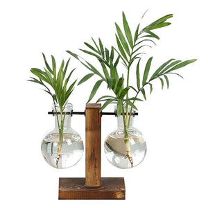 Stylish Suspended Glass Vase for Plants