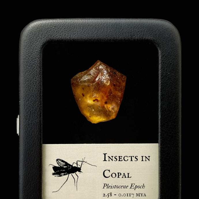 Insects in Pleistocene Copal - Pleistocene: 2.58 mya