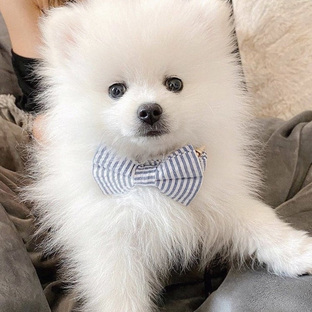 Blue Stripes Bow Tie Collar - Sniff & Bark