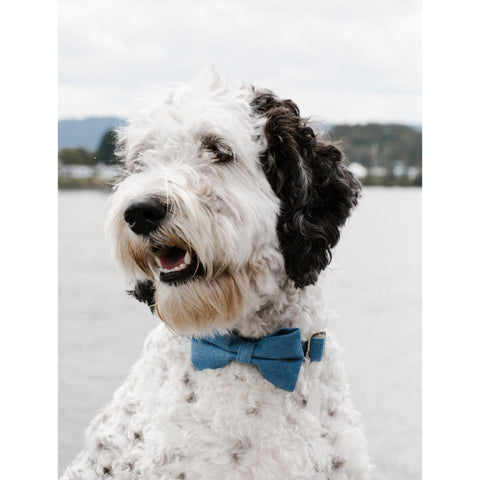Jeans Bow Tie Collar - Sniff & Bark