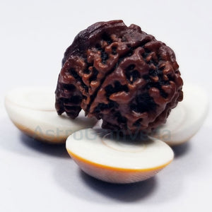 Ganesh Rudraksha Natural from nepal BASIC LUXURY