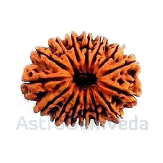 18 Mukhi Rudraksha Natural from Nepal