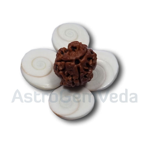3 Mukhi/faces Rudraksha from Nepal
