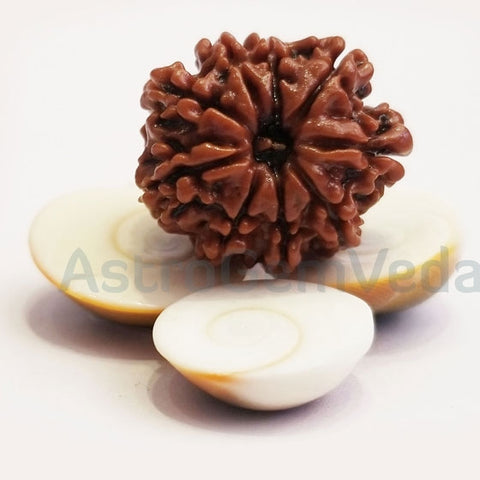 9 Mukhi Natural Rudraksha from Nepal - Basic L