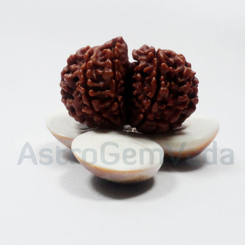 Gauri Shankar Rudraksha Natural from nepal LUXURY