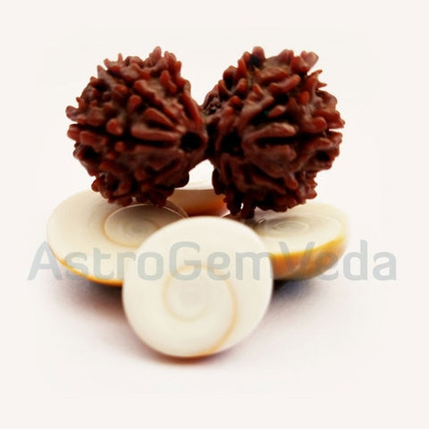 Gauri Shankar Rudraksha Natural from nepal BASIC