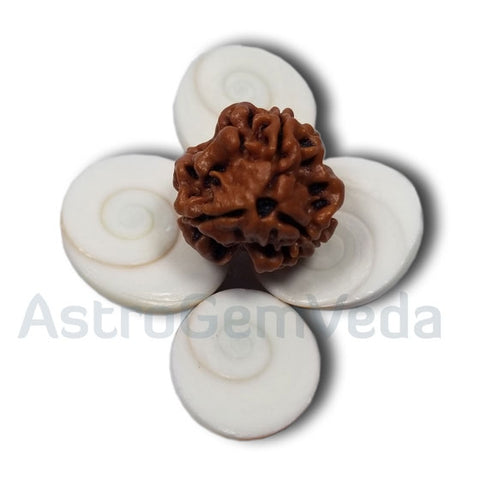 3 Mukhi Natural Rudraksha from Nepal
