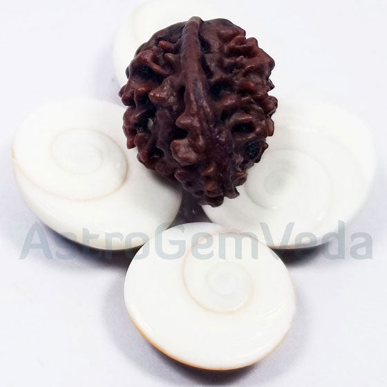 Ganesh Rudraksha Natural from nepal BASIC