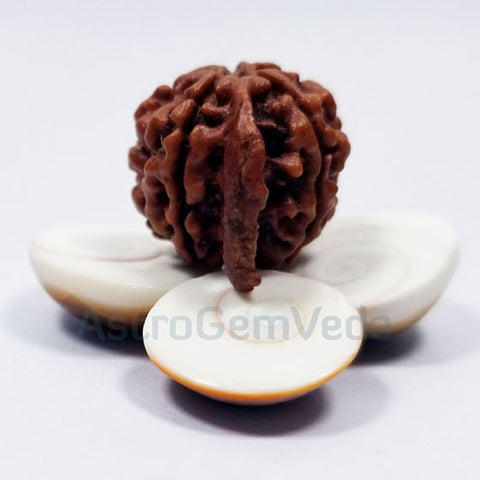 Ganesh Rudraksha Natural from nepal PREMIUM LUXURY