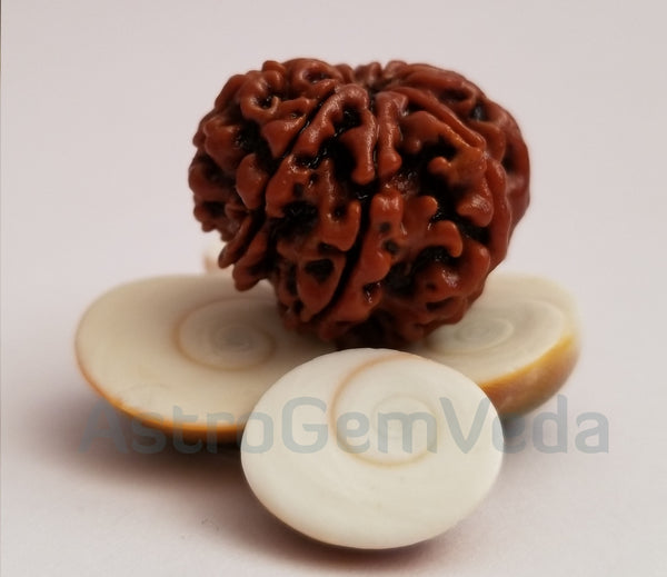 9 Mukhi /faces Rudraksha Natural from Nepal -Premium
