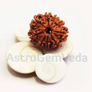 9 Mukhi /faces Rudraksha Natural from Nepal - Luxury small