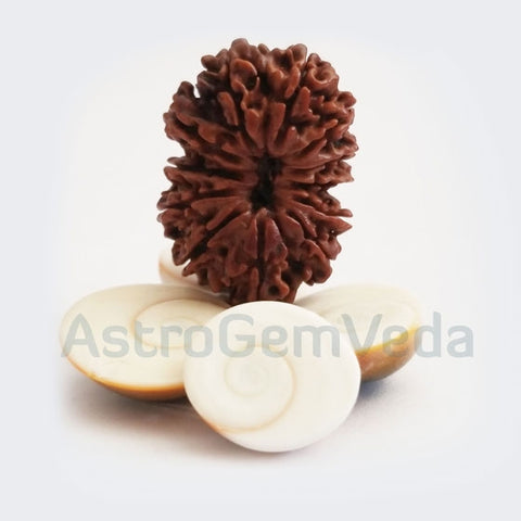 12 Mukhi Rudraksha Natural from Nepal - PREMIUM LUXURY