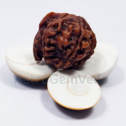 Ganesh Rudraksha Natural from nepal PREMIUM