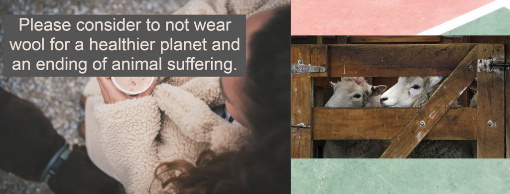 7 Facts about Wool