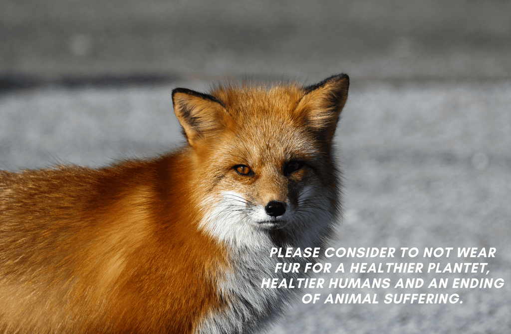 Facts about Fur