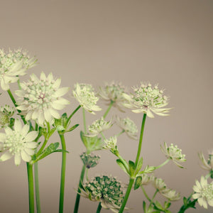 GREEN FLOWERS - Bloomsfully