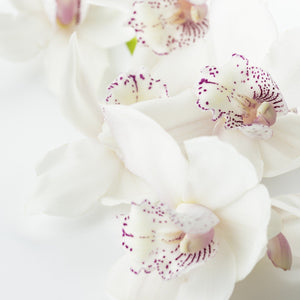 WHITE FLOWERS - Bloomsfully