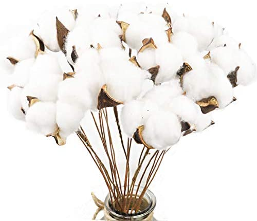 Natural White Cotton Stems Dried Flower Branch for Wedding  & Home Decoration (20 Pack Cotton Stems) - Bloomsfully Wholesale Flowers