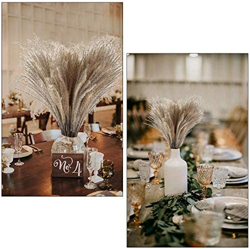 Dried Pampas Grass Plumes 50pcs 17 Inch Tall - Bloomsfully Wholesale Flowers