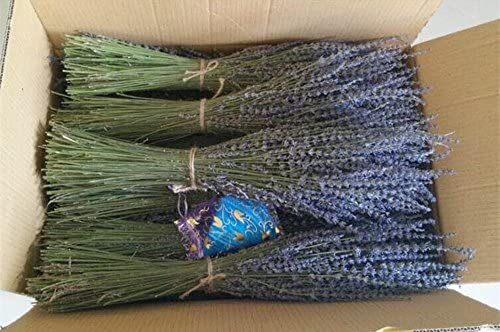 "Lavender Dried Ultra Blue Bundles(16"" - 18"" Long) for Home Decor, Crafts, Gift, Wedding or Any Occasion - Bloomsfully Wholesale Flowers"