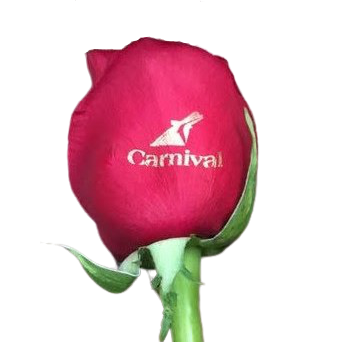 "Custom Promotional ROSES  ""logo or message"" (20 Stems Per Bunch)"