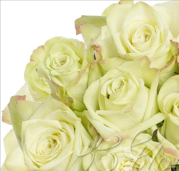 Green Roses (25 Stems per Bunch) - Bloomsfully Wholesale Flowers
