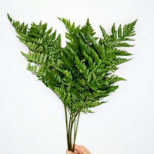 Leather Leaf - Bloomsfully Wholesale Flowers