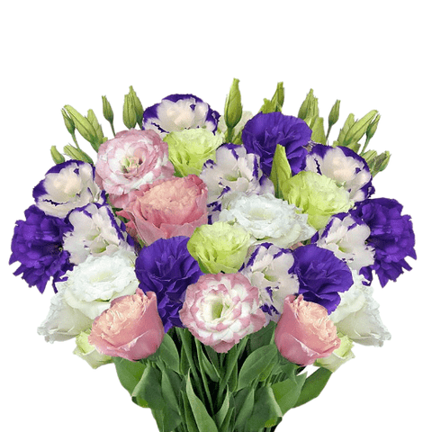 Lisianthus Assorted Pack per 80 stems - Bloomsfully Wholesale Flowers