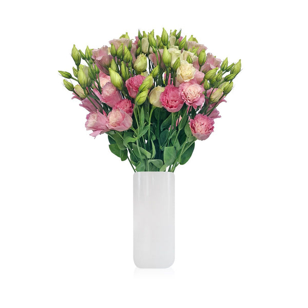 Lisianthus Pink Pack per 80 stems - Bloomsfully Wholesale Flowers