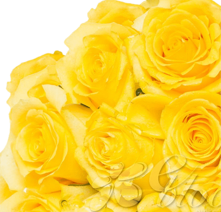 Yellow Roses (25 Stems per Bunch) - Bloomsfully